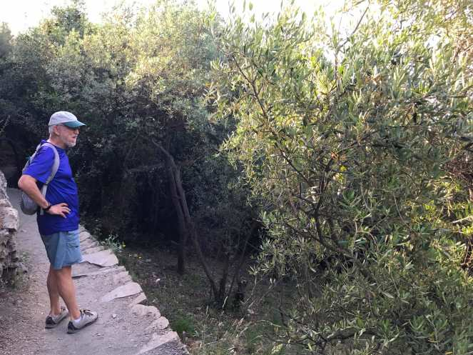 Charlie checking out the Olive tree grove