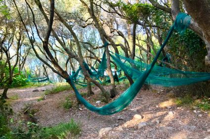 Olive tree nets, which sure looked like hammocks to me!