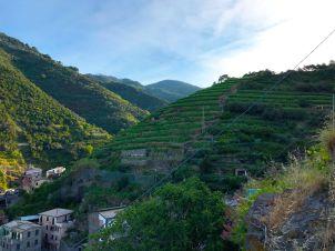 Tiered vineyards